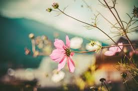 Koop nu een zeer mooi rouwboeket Heerlen